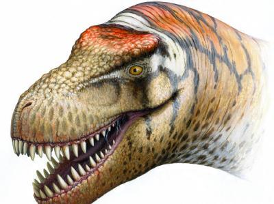 [Wissen] Spektakuläre Dino-Entdeckung: Vetter von T. rex in China entdeckt