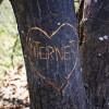 [Web] Eidgenossen tun sich (noch) schwer in Sachen Netzneutralität